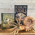 Dig Your Own Fossils - Large Pack