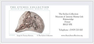 The Etches Collection  - CHILD admission (ages 5-16) Gift Voucher