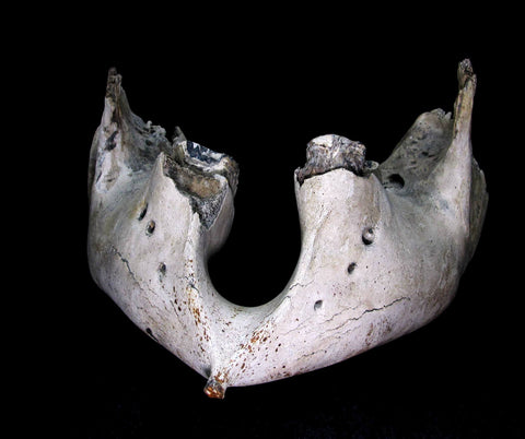 Lower Mammoth Jaw with teeth  [ Ref FG6 ]