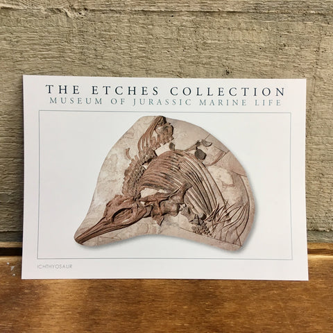 The Etches Collection Postcard - Ichthyosaur