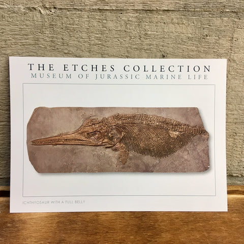 The Etches Collection Postcard - Ichthyosaur with a full belly