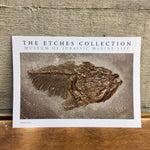 The Etches Collection Postcard - Thrissops