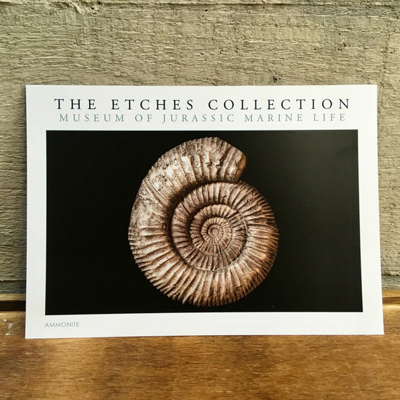 The Etches Collection Postcard - Ammonite