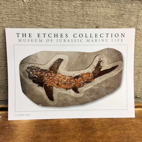 The Etches Collection Postcard - Caturid Fish