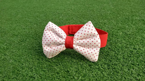 Bowtie - White with Red Dots