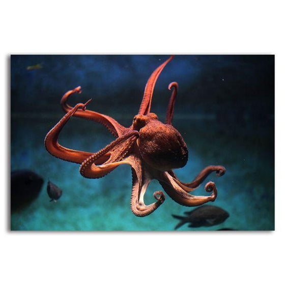 Amazing Octopus 1 Panel Canvas Wall Art