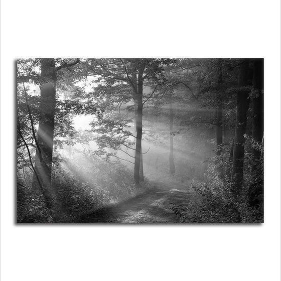 Black And White Forest Wall Art