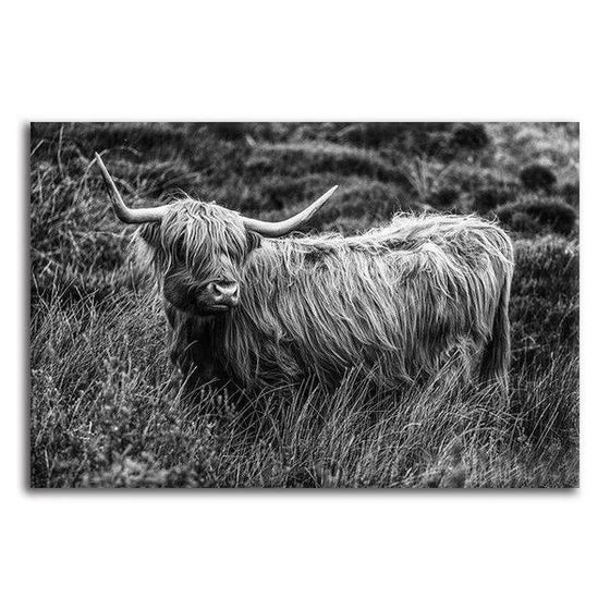 Black And White Upland Cattle Canvas Wall Art