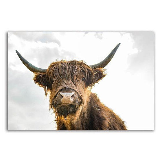 Highland Cattle Canvas Wall Art