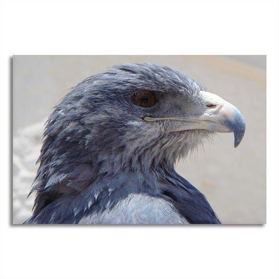 Magnificent Eagle Head Canvas Wall Art