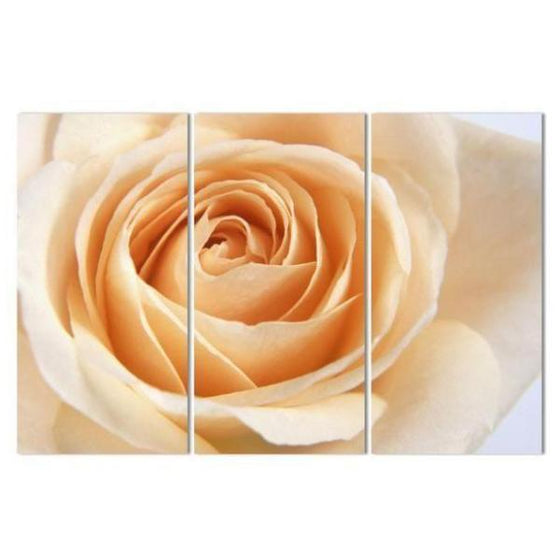 Peach Rose Canvas Wall Art