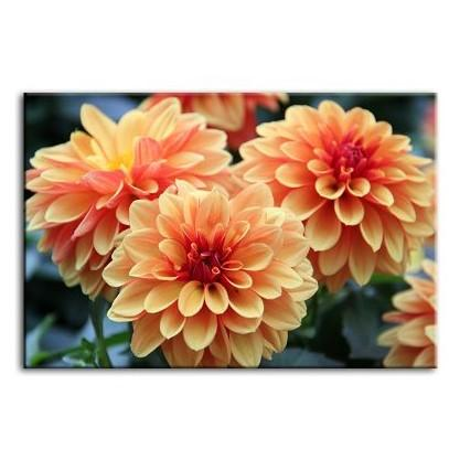 Orange Dahlia Flowers Canvas Wall Art
