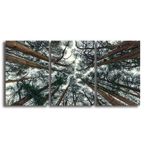 Pine Trees Bottom View 3 Panels Canvas Wall Art