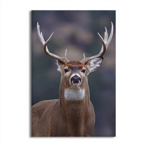 Proud Wild Deer Canvas Wall Art