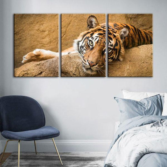 Relaxed Wild Tiger 3 Panels Canvas Wall Art Bedroom