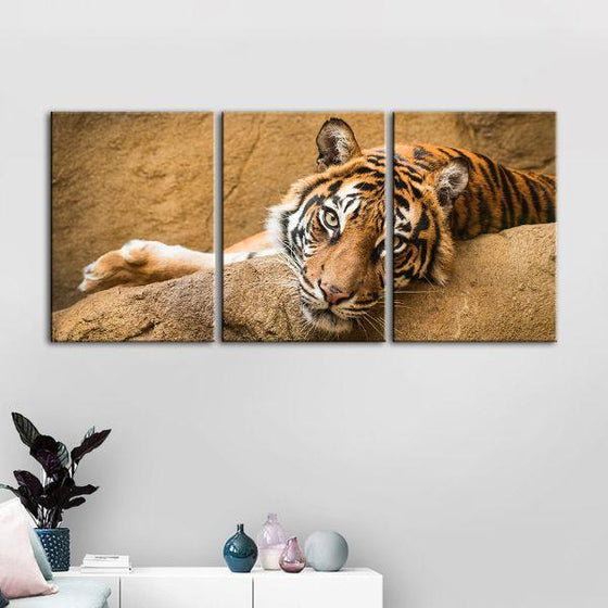Relaxed Wild Tiger 3 Panels Canvas Wall Art Decor