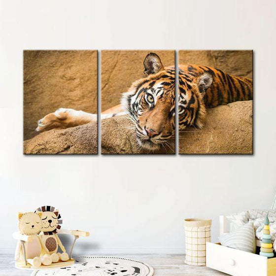 Relaxed Wild Tiger 3 Panels Canvas Wall Art Set