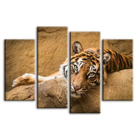 Relaxed Wild Tiger 4 Panels Canvas Wall Art