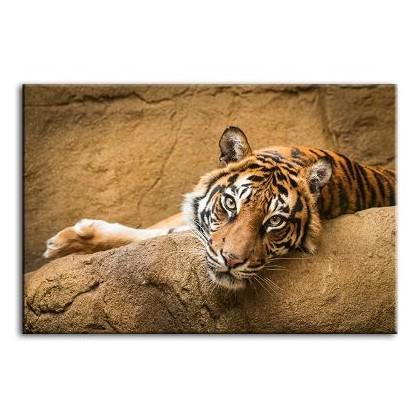 Relaxed Wild Tiger Canvas Wall Art
