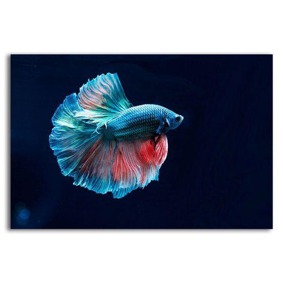 Siamese Fighting Fish Canvas Wall Art
