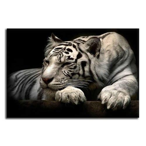 Sleeping White Tiger Canvas Wall Art