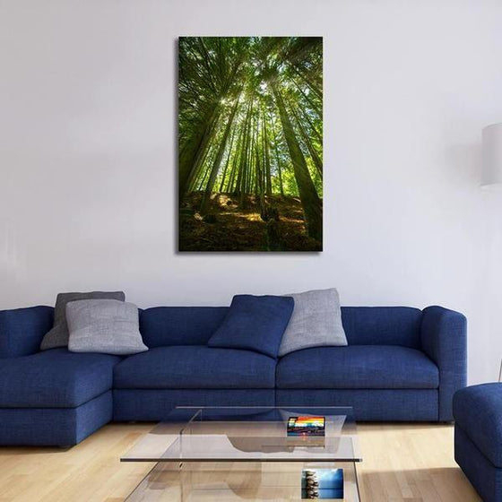 Sunlight And Tall Trees Wall Art Print