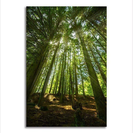 Sunlight And Tall Trees Wall Art