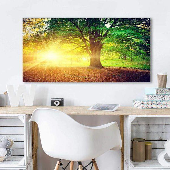 Sunlight Over A Huge Tree Canvas Wall Art Office