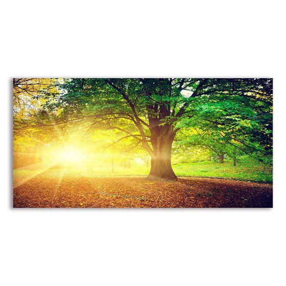 Sunlight Over A Huge Tree Canvas Wall Art
