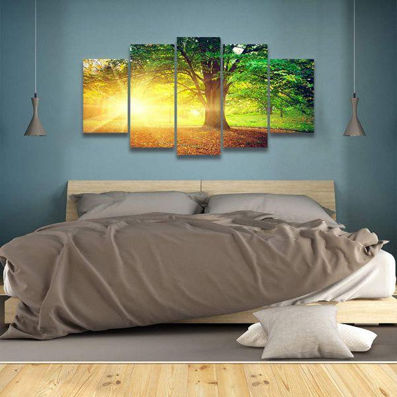 Sunshine Over A Big Old Tree Canvas Art
