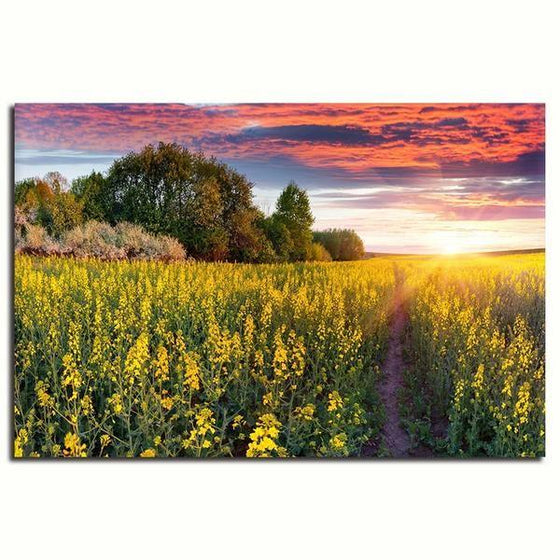 Sunrise In A Field Of Flowers Wall Art