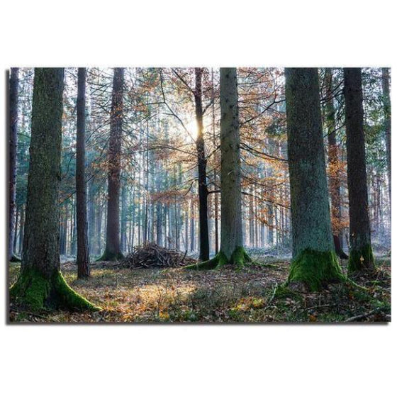Sunrise In The Woods Wall Art Canvas