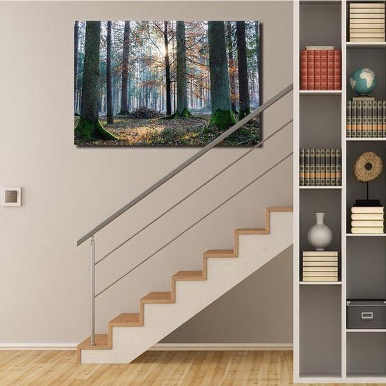 Sunrise In The Woods Wall Art Decors
