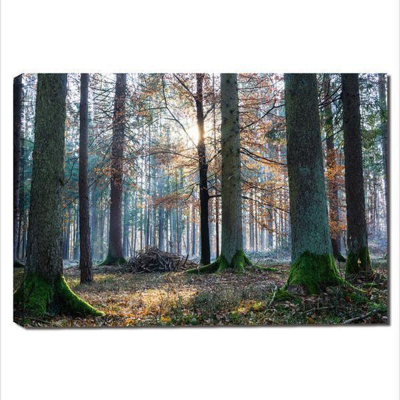 Sunrise In The Woods Wall Art