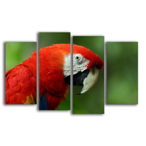 Vibrant Red Macaw Canvas Wall Art