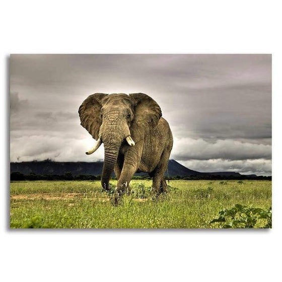 Wild Elephant Canvas Wall Art