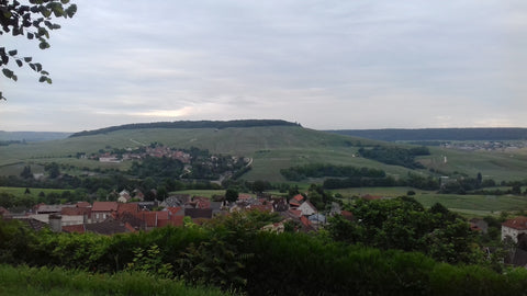 The vineyards of the Champagne region - Black Forest & Vosges Motorbike Tour