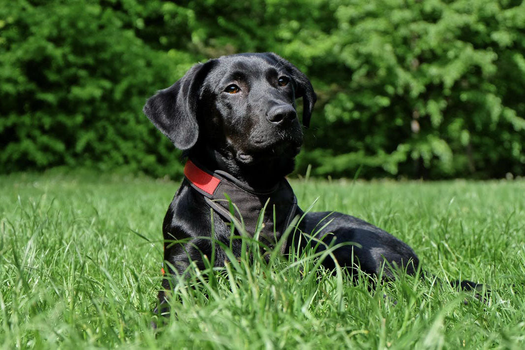 5 essential commands you can teach your dog