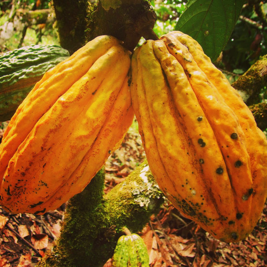 What is Ceremonial Grade Cacao?