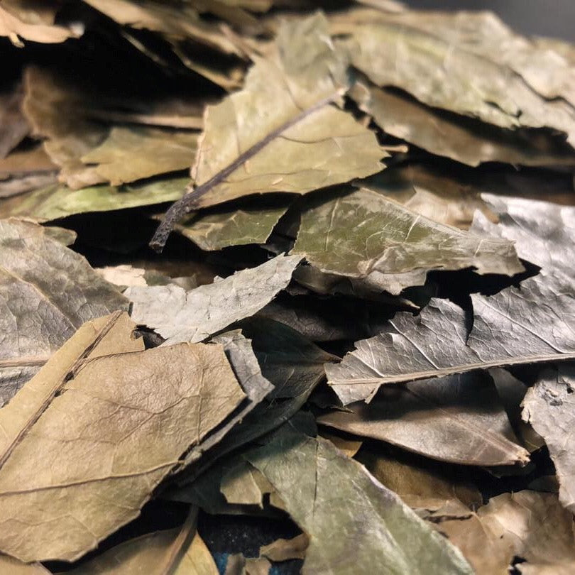 Organic Whole Leaf Guayusa