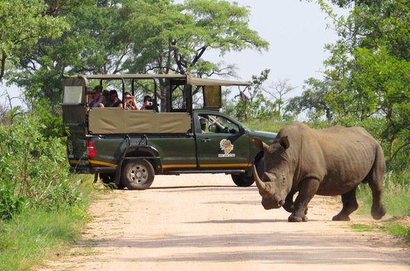 Kruger National Park - Self Drive Experience