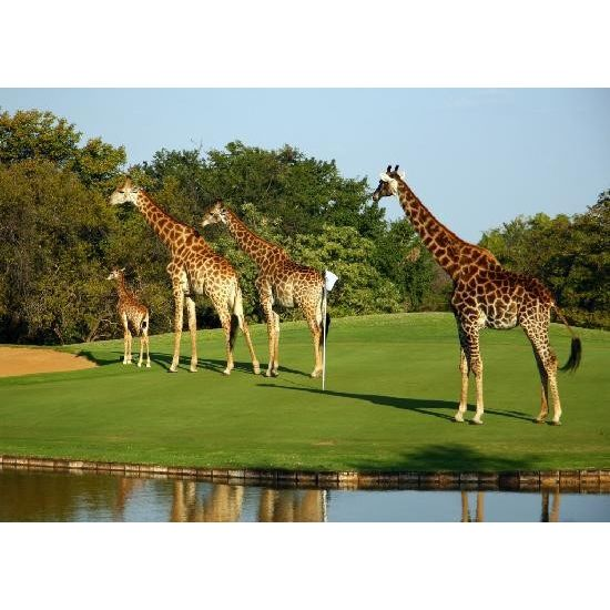 Golfing South Africa - Signature Experience