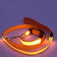 Collier et Laisse Luminescents