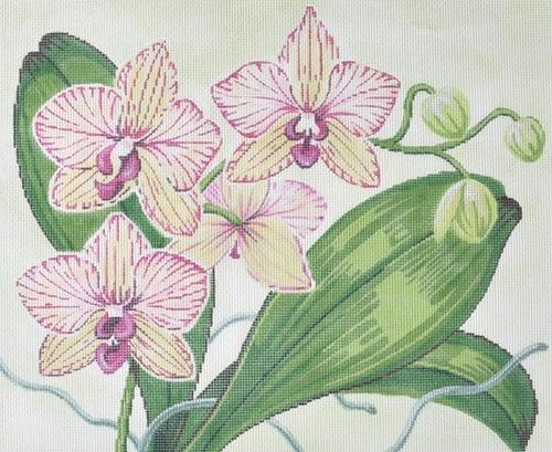 Orchids on 13 Painted Canvas Labors of Love Needlepoint