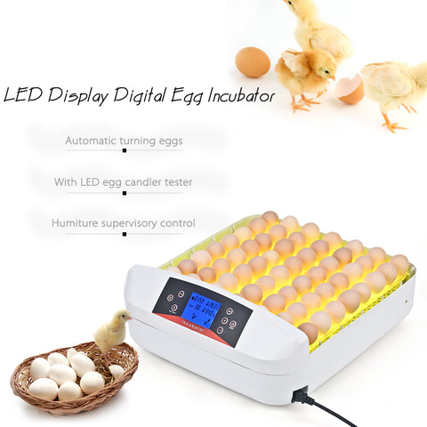 Full-automatic Egg Incubator
