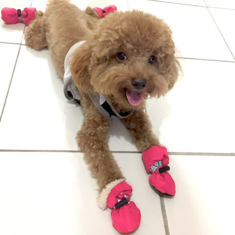 Dog Shoes. Waterproof & Reflective. Anti Slip, Rain Boots. Adjustable Paw Protector For Dogs. 4 Piece Set