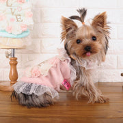 High End Love Floral Lace Dog Dresses - Diddo Furry Tails Pet Store