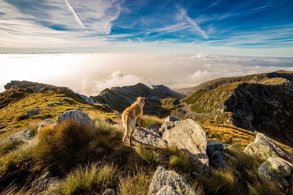 6 of the Best Dog-Friendly Vacations to Take in the U.S.