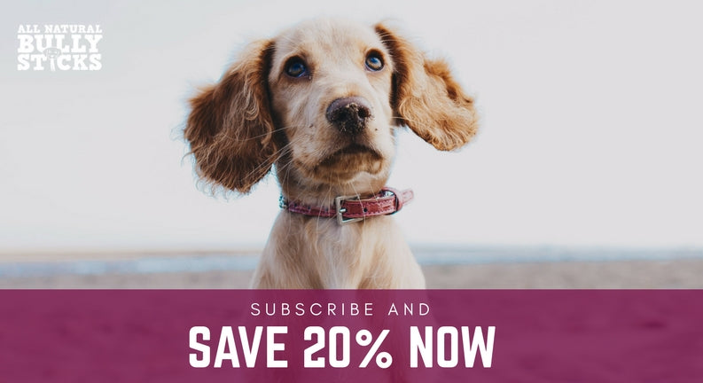 Subscribe and Save 20% Now