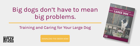 Big dogs don't have to mean big problems